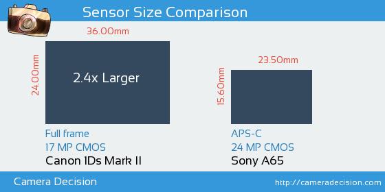 Canon 1Ds MII vs Sony A65 Sensor Size Comparison