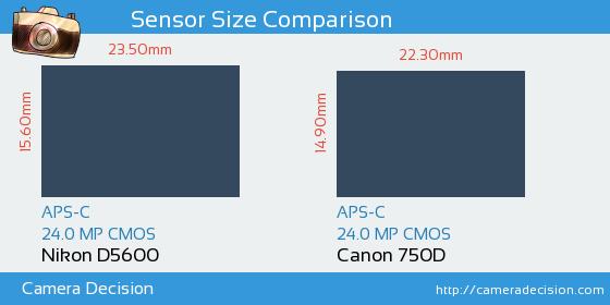 Nikon D5600 vs Canon 750D Sensor Size Comparison