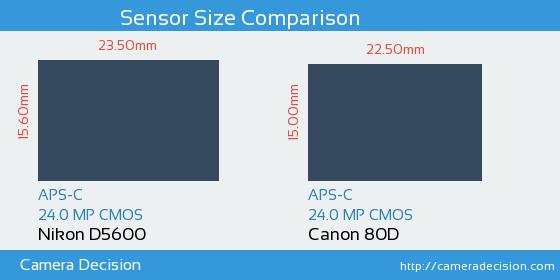 Nikon D5600 vs Canon 80D Sensor Size Comparison