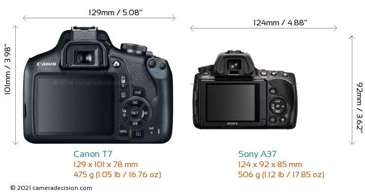 Canon T7 vs Sony A37 Camera Size Comparison - Back View