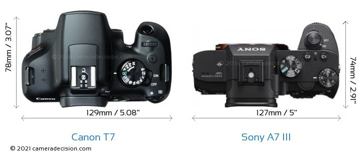 Canon T7 vs Sony A7 III Camera Size Comparison - Top View