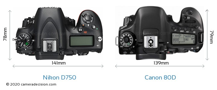 Nikon D750 vs Canon 80D Camera Size Comparison - Top View